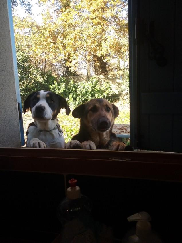 photo chiens 1