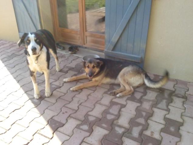 photo chiens 2