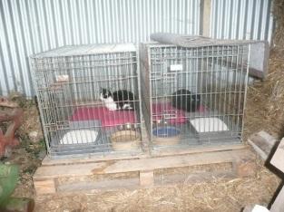 Cages de convalescence