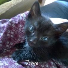freya10